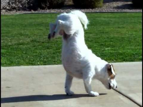 Amazing Dog Tricks | Jesse (World's Smartest Dog)
