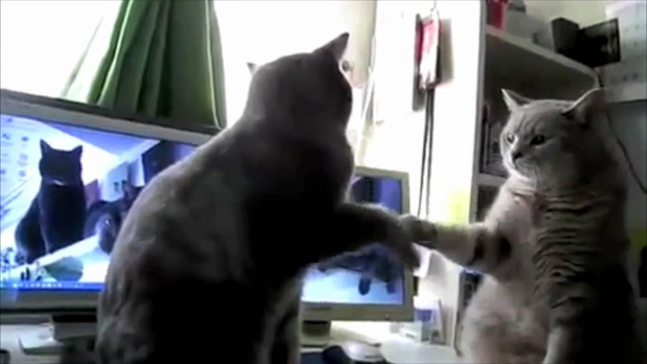 Cats Playing Patty-Cake