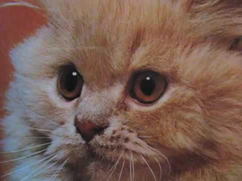 Kittens…Inspired By Kittens