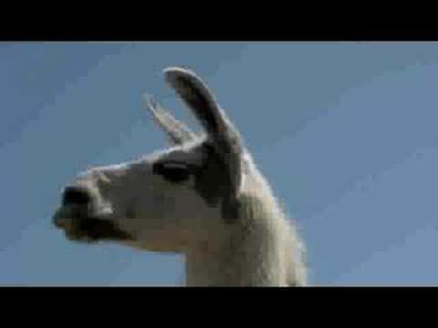Mama Llama   Hullabaloo