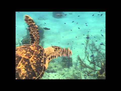 Out On The Coral Reef | Brent Holmes